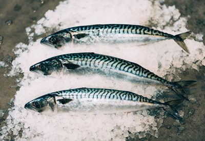 Mackerel 129368463 Web
